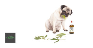 40_cbd-oil-for-dogs-1